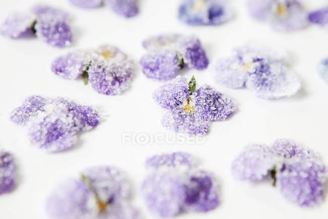 Vista de cerca de violetas confitadas en la superficie blanca - foto de stock