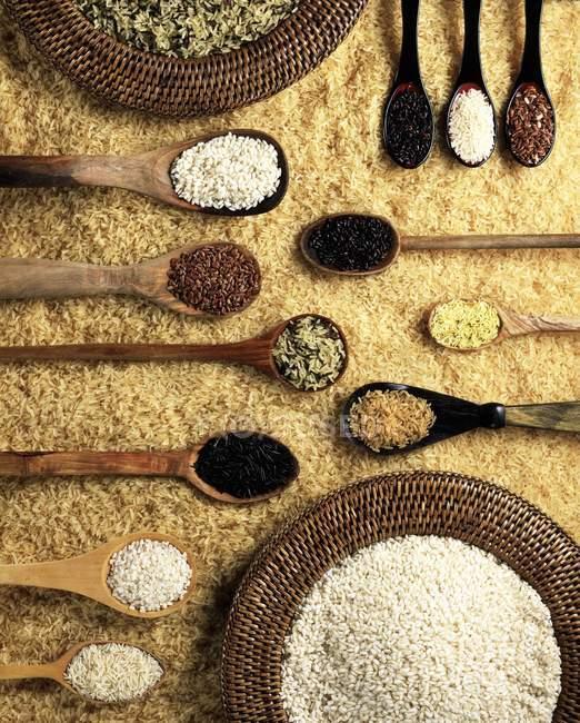 Varios tipos de arroz - foto de stock