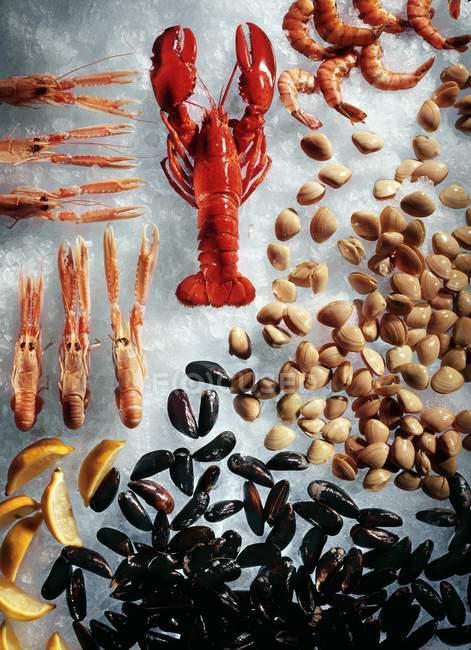 Vue de dessus du homard cuit arrangé avec coquillages et langoustines sur glace — Photo de stock