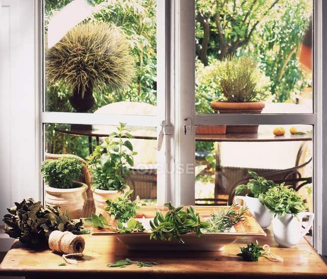 Lots of different herbs in front of a kitchen window with a view of the garden — Stock Photo