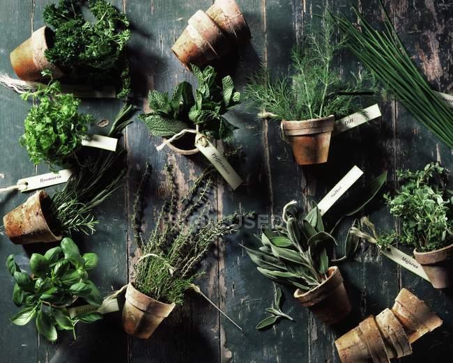 Herbes culinaires variées dans des pots en terre cuite renversés — Photo de stock