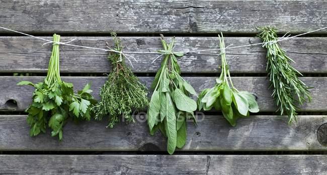 Manojos de hierbas frescas - foto de stock