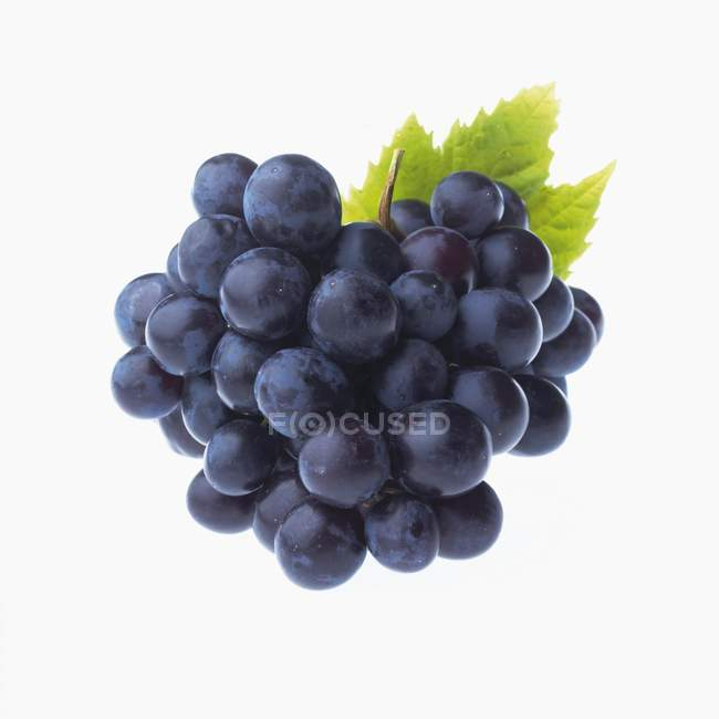 Red grapes with leaf — Stock Photo