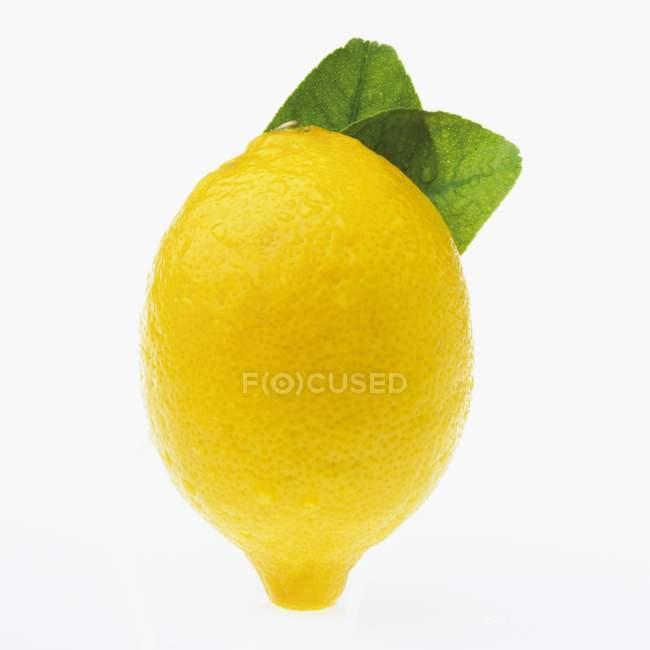 Frische Zitrone mit Blatt — Stockfoto