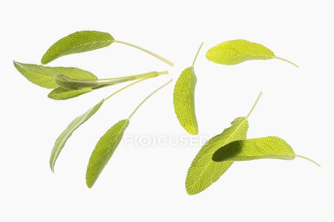 Several fresh sage leaves — Stock Photo