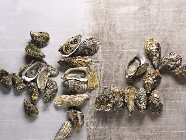 Свежий разных видов устриц — стоковое фото