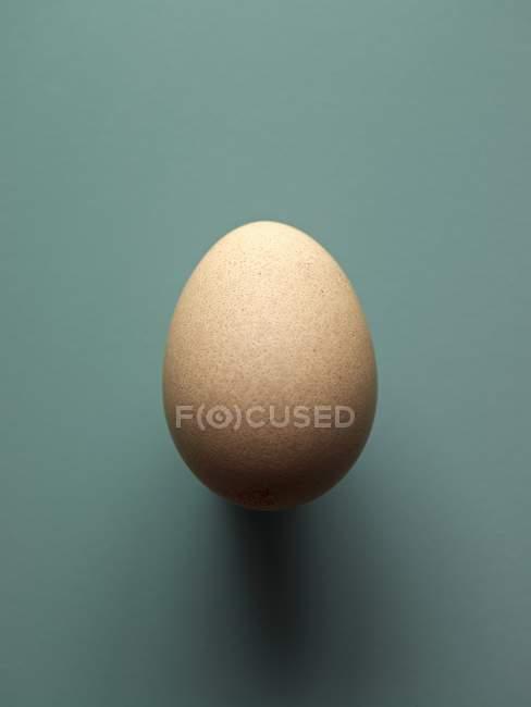 Fresh brown chicken egg — Stock Photo
