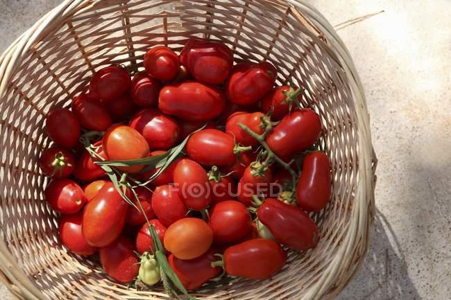 Свіжі взяв червоні помідори — стокове фото