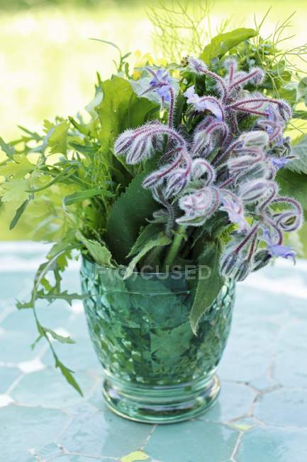 Herbs in a glass of water — Stock Photo
