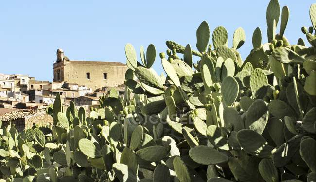 Vista diurna do cacto fora uma cidade na Sicília — Fotografia de Stock