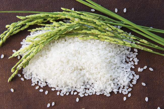 Ears of rice on mound of rice — Stock Photo