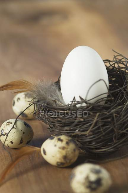 Closeup view of a white egg in an Easter nest with quail eggs — Stock Photo
