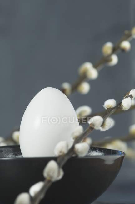 Closeup view of a white egg in a bowl between twigs of pussy willow — Stock Photo