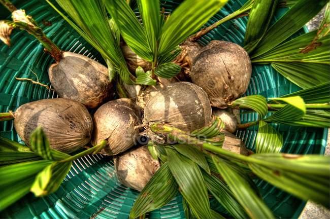 Cocos en cáscaras en la cesta - foto de stock