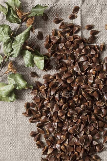Купи beechnuts — стокове фото