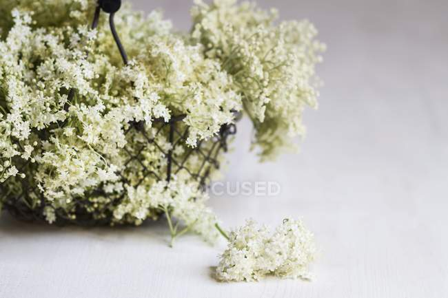 Closeup view of wire basket of elderflowers on grey background — Stock Photo