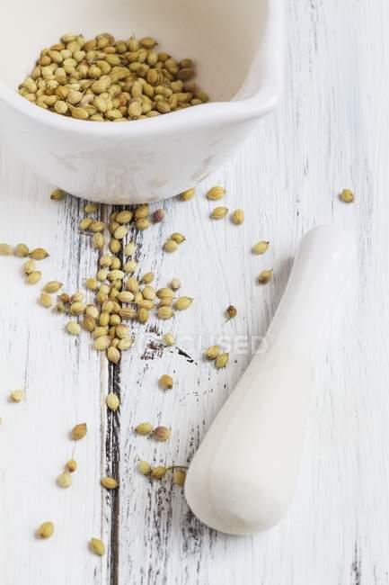 Коріандр насіння в ступці — стокове фото