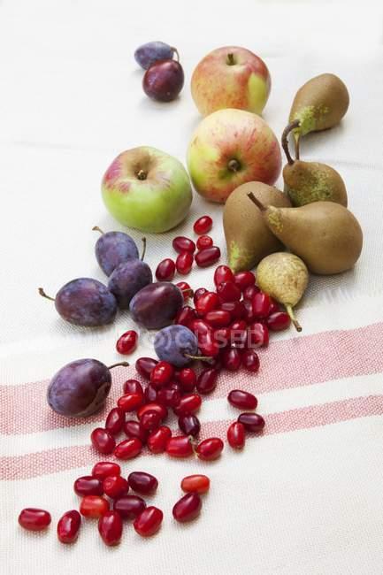 Ciruelas con manzanas y peras - foto de stock