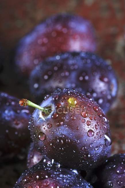 Plums with water droplets — Stock Photo