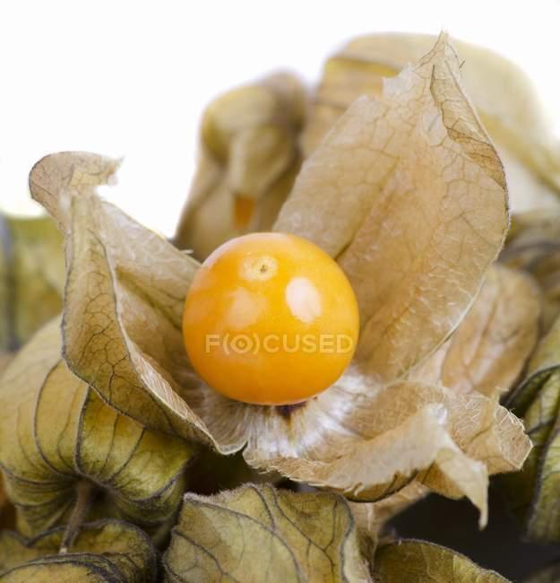 Physalis fruit with husk — Stock Photo