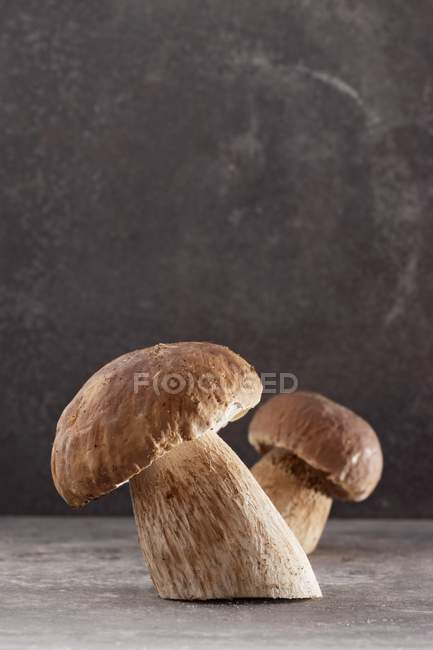 Two fresh cutted ceps — Stock Photo