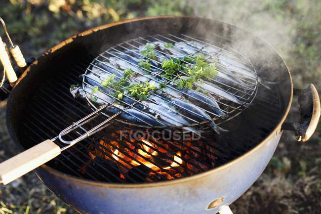 Elevated view of barbecuing sardines with herb — Stock Photo