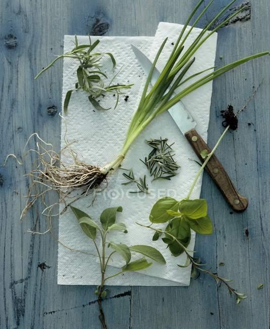 Vista superiore di erbe fresche assortite su carta bianca — Foto stock