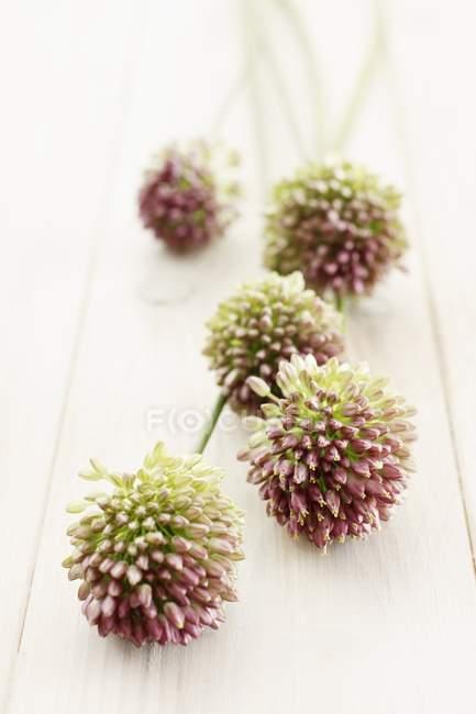 Flores de Allium en una superficie de madera - foto de stock