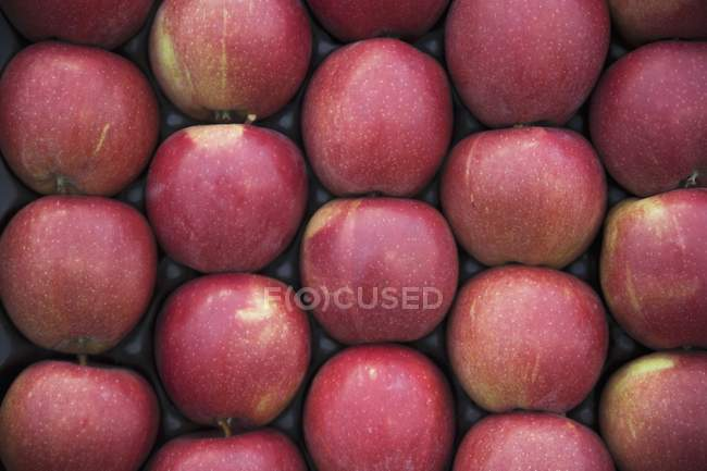 Red apples in crate — Stock Photo