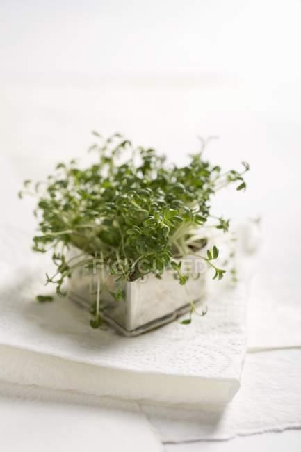Crescione fresco in una pentola di metallo — Foto stock