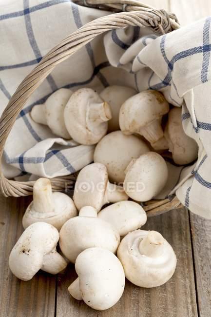 Грибочки білі в кошик — стокове фото