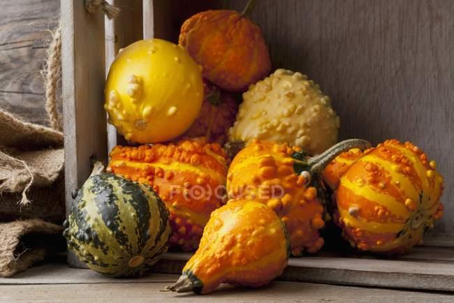 Zucca ornamentale selezionati freschi — Foto stock