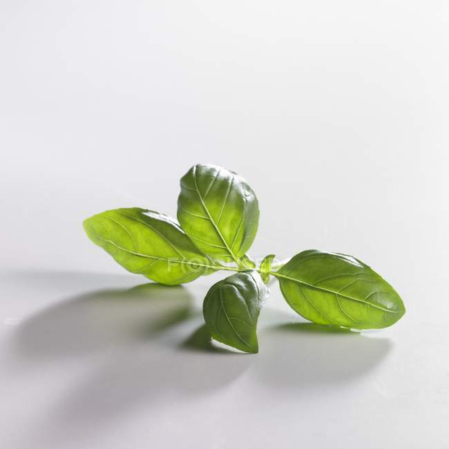 Rametto di basilico verde — Foto stock