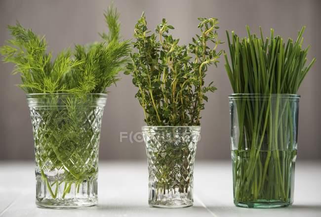 Aneto fresco con timo ed erba cipollina — Foto stock