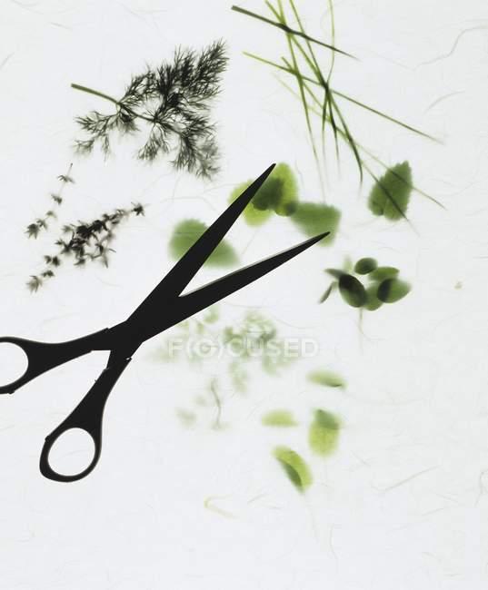Vista del primo piano di erba assortiti rametti e forbici su priorità bassa bianca — Foto stock