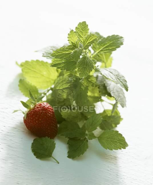 Lemon balm and fresh strawberry — Stock Photo