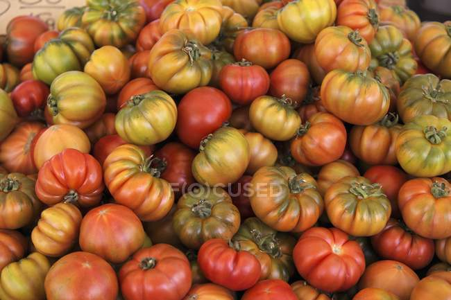 Colorful Beefsteak tomatoes — Stock Photo