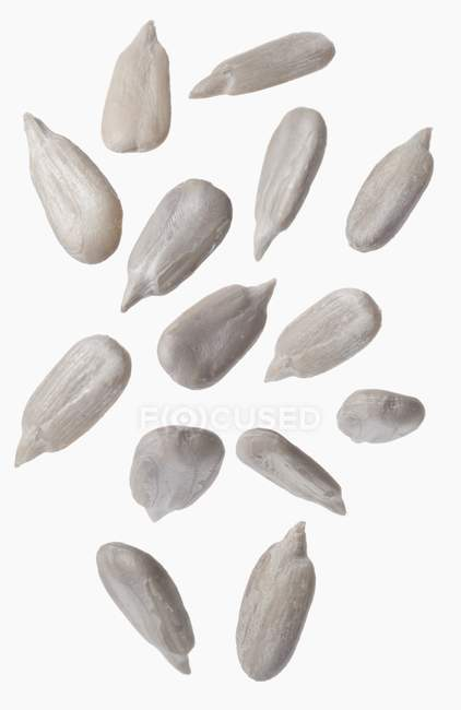 Semi di girasole bianco — Foto stock
