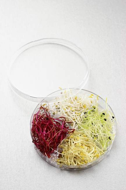 Assorted edible shoots in a glass bowl — Stock Photo