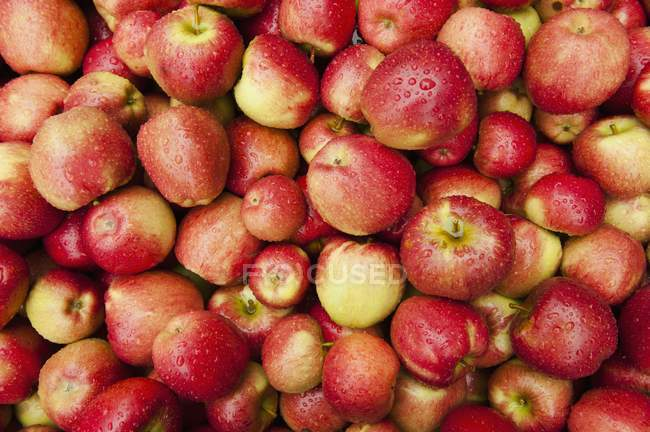 Fresh Red-cheeked apples — Stock Photo