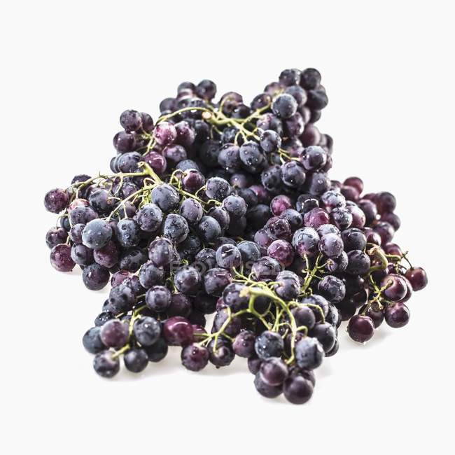 Fresh picked black grapes — Stock Photo