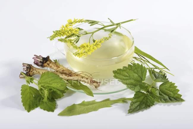 Té con hierbas y plantas medicinales - foto de stock