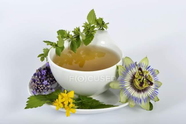 Thé et ingrédients à base de plantes — Photo de stock