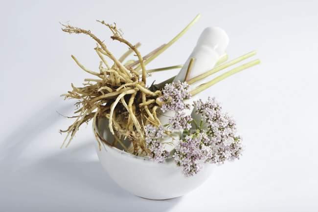 Крупним планом зору кореня валеріани і в ступці білі квіти — стокове фото