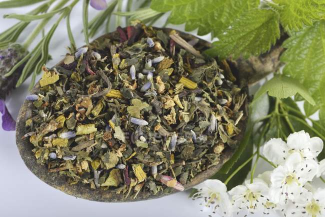 Mélange pour tisane au gui — Photo de stock