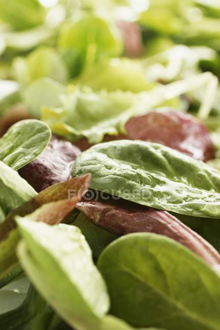 Mixed fresh salad leaves — Stock Photo