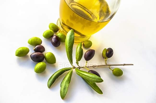 Оливки черные Абд зеленый с филиал — стоковое фото