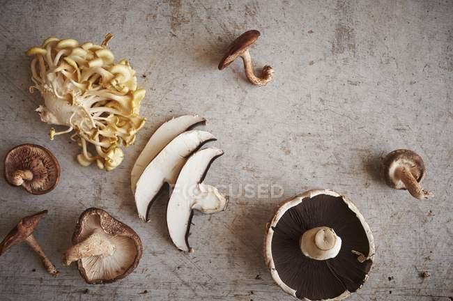 Vista superior de surtido setas de ostra incluyendo superficie madera, shiitake y Portobello - foto de stock