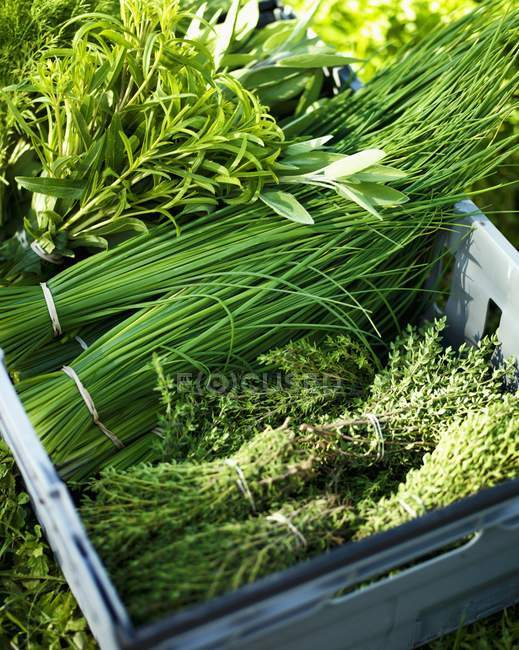 Bunches of herbs in crate — Stock Photo