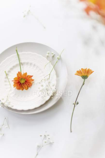 White plates with Gypsophila and marigold flowers — Stock Photo